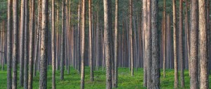 Research Connector: Forestry and Environment @ Wu Centre
